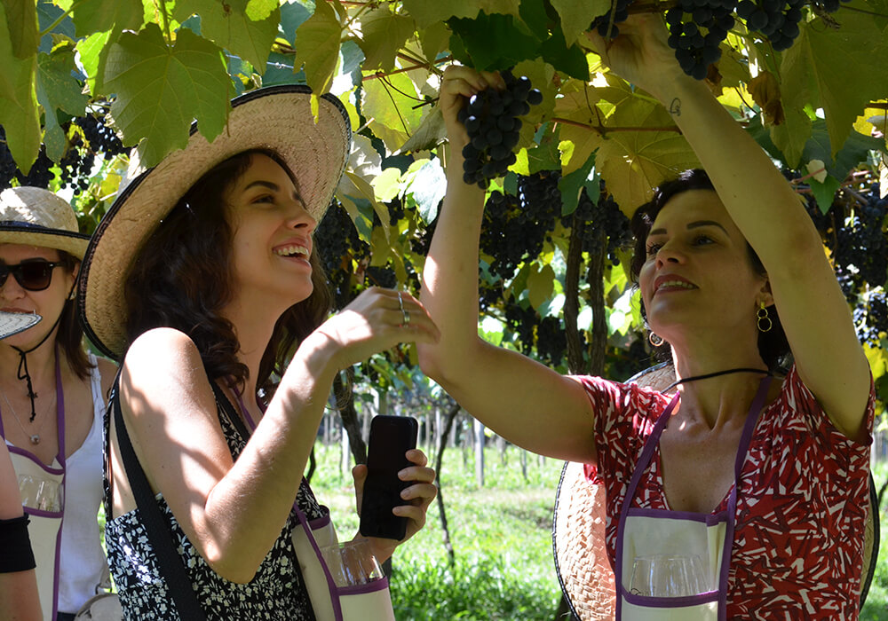 vinicola-cainelli-vinhos-de-emocao-slide-img-2