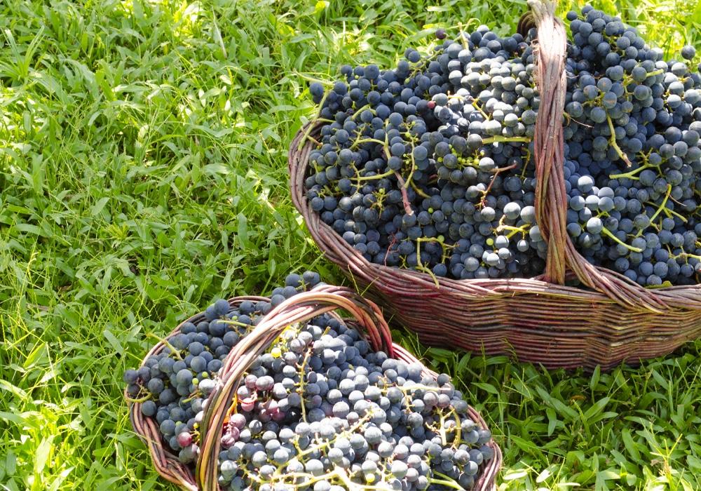vinicola-cainelli-cestas